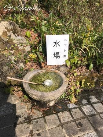 犬と伊豆高原の神祇大社