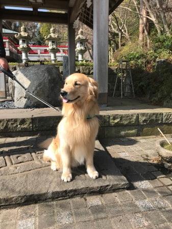 犬と伊豆高原の神祇大社(犬用水飲み場)