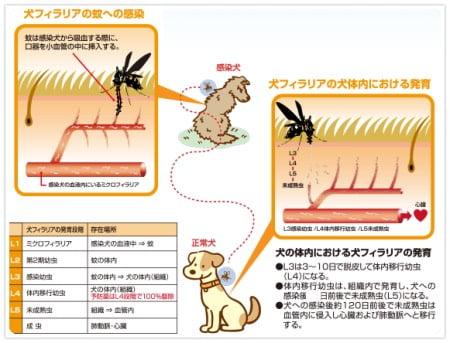 フィラリア予防(犬)