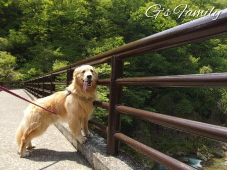犬と鬼怒川観光(龍王峡)