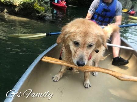 玉淀湖で犬とカヌー体験