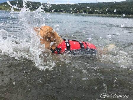 山中湖で水遊び