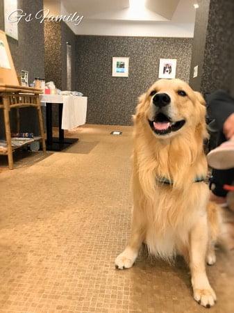 大型犬と泊まる元箱根ルチアカーロホテル