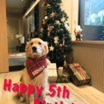 5歳の誕生日[2019年12月]G's Family ゴールデン・レトリーバー セナ 成長の記録【 5歳 0ヶ月 】