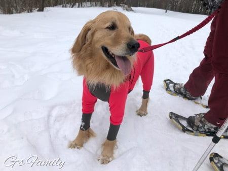 大型犬の雪遊びウェア