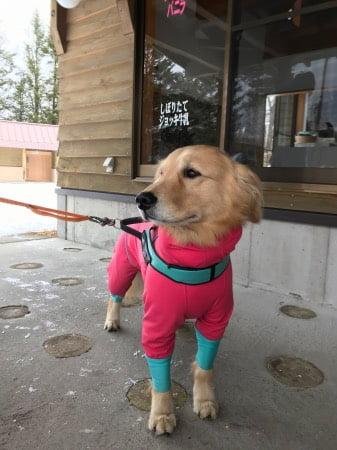 犬と軽井沢でスノーシュー