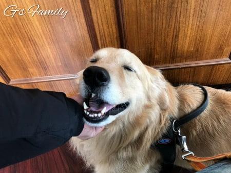 犬の腹部超音波検査が終わった後のセナ