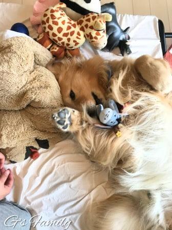 ベッドの上でおもちゃと戯れるセナ