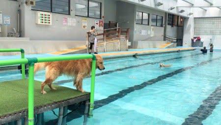 クラス・ザ・ウルフ宿泊ワフのプールで遊ぶセナ