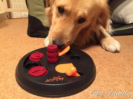 TRIXIE(トリクシー)犬の知育トイで遊ぶセナの様子