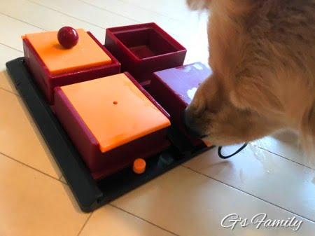 TRIXIE(トリクシー)犬の知育トイポーカーboxで遊ぶセナ