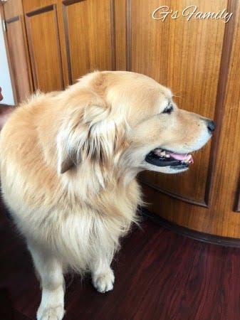 犬のアトピー性皮膚炎治療薬(注射)サイトポイント1日目