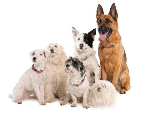 小型犬から大型犬まで