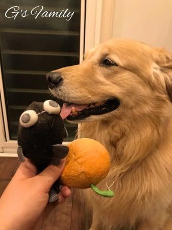 セナが6歳のお誕生日に選んだおもちゃ