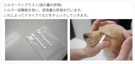 犬のシルマー涙液試験