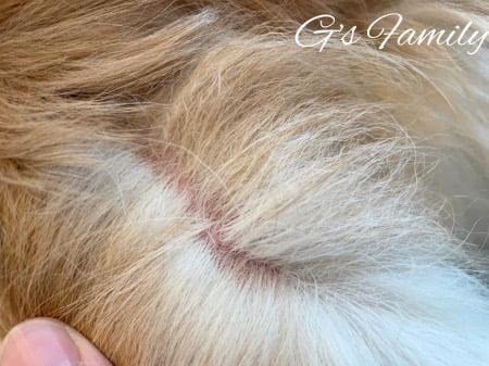 セナ6歳1ヶ月尻尾の炎症と痒み