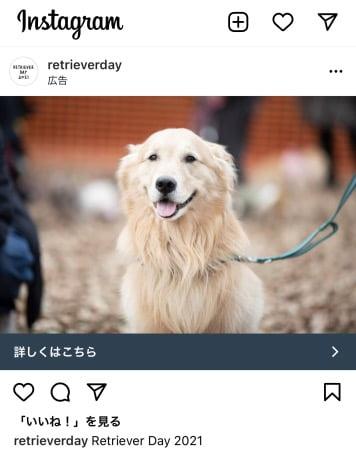 RetrieverDay2021の広告モデル(ゴールデン・レトリーバーセナ)