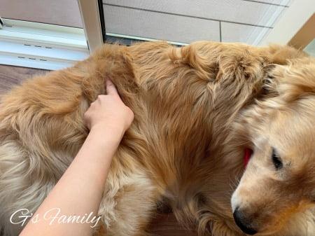 犬の類表皮嚢胞(背中)