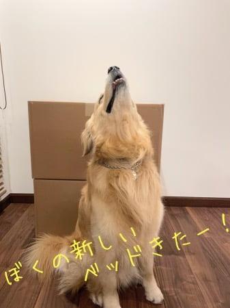 L.L.Bean(エルエルビーン)の「プレミアム・ドッグ・ベッド・カウチ」大型犬サイズが到着