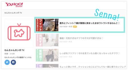 わんちゃんホンポTV(Yahoo!公式)
